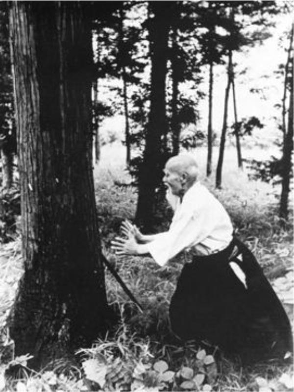 ueshiba tree